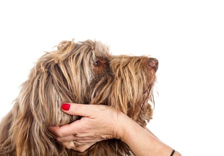 caresses: Portrait of a faithful dog on isolated white background Stock Photo
