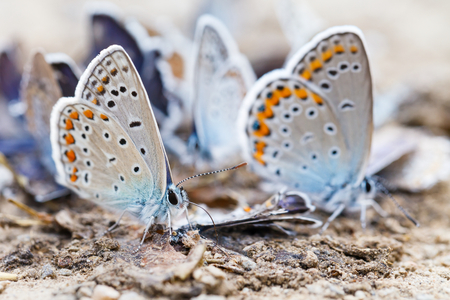 reproduction: Close up photo of feeding butterfly family