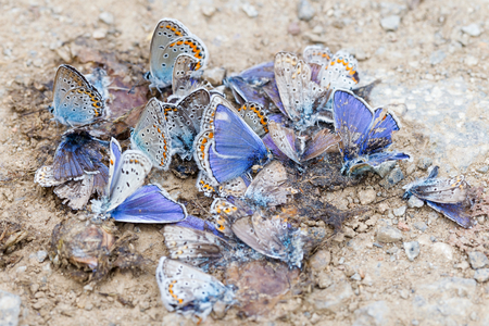 moths: Close up photo of destroyed butterfly family Stock Photo