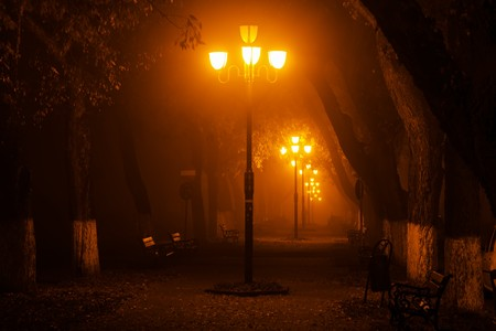 urban jungle: Mysterious photo in the park at night Stock Photo