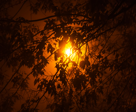 percolate: Photo of silhouetted tree at night in lamp light