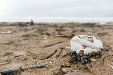 hazardous: Close up photo of a plastic bottle litter on the beach