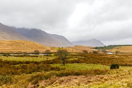 irish landscape: Photo of irish countryside landscape in winter