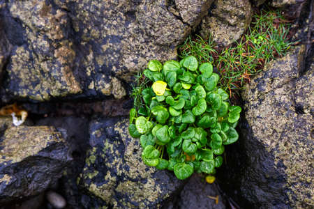 vitality: Close up photo of green plant growing between stones
