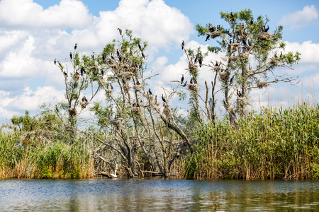delta: Landscape photo of beautiful Danube Delta wildlife