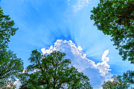 heaven background: Photo of top of the trees and cloudy blue sky from under view Stock Photo