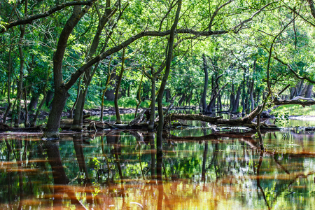 Photo of forest trees reflection in water