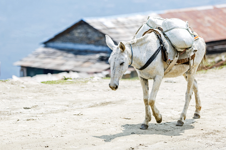 lagging: Photo of loaded horse in the mountains