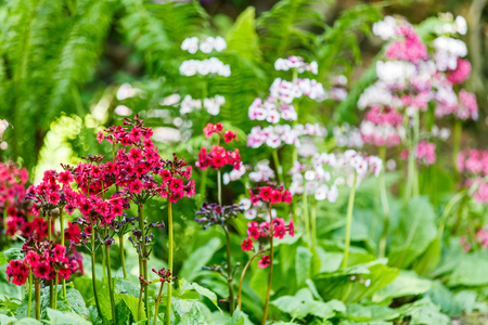 specific: Blooming small colorful flowers in the garden Stock Photo