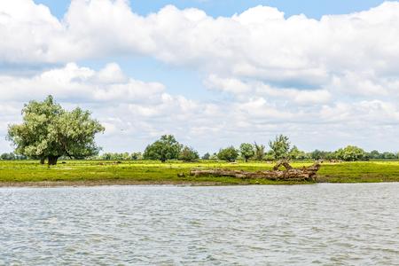 Springtime Danube riverside landscape photo in Romania Reklamní fotografie