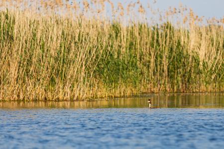 danube delta: Landscape photo of beautiful Danube Delta wildlife