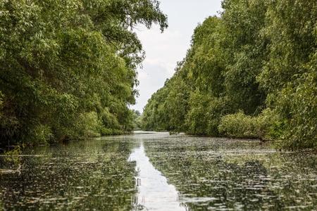turbid: Landscape photo of beautiful Danube Delta wildlife