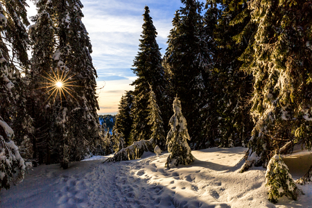 evergreen: Picturesque snowy landscape and pine trees at sunset Stock Photo