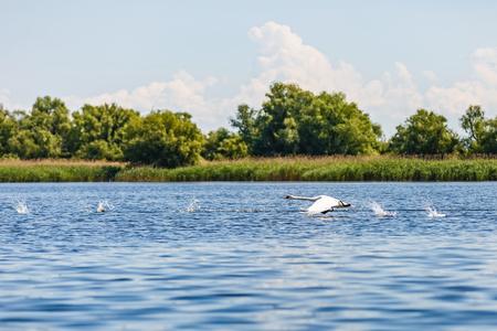 Beautiful landscape photo of Danube Delta in Romania Stock Photo