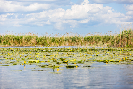 Landscape photo of beautiful Danube Delta wildlife