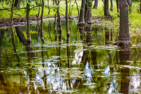 mirroring: Photo of forest trees reflection in water