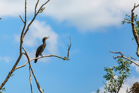 Photo of great cormorant standing on tree branch Stock Photo