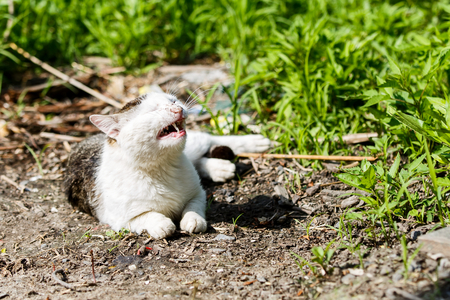 Lying abused cat crying from the pain Stock Photo