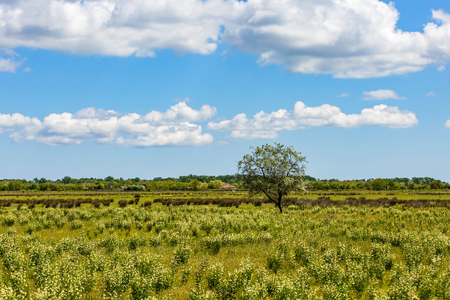 picturesque: Landscape photo of cloudy blue sky and green meadow