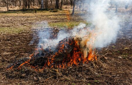 Autumn work on weed harvesting, burning dry grass in the garden, on a sunny day Standard-Bild