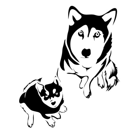 husky puppy: Outline dog and puppy husky top view vector template.