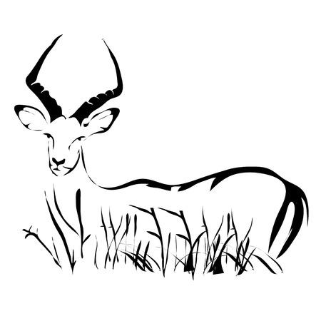 Outline antelope impala vector image. Stock Vector - 53992872