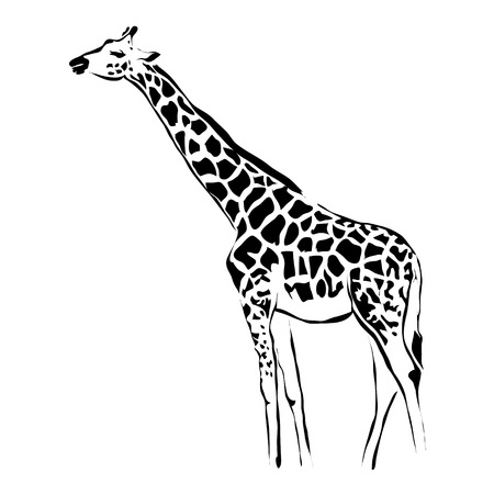 camelopardalis: Outline giraffe vector image. Can be use for logo