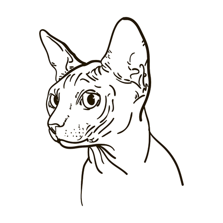 Outline cat sphynx vector illustration. Can be use for logo and tatoo