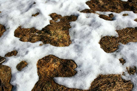 thawed: some thawed snow in spring