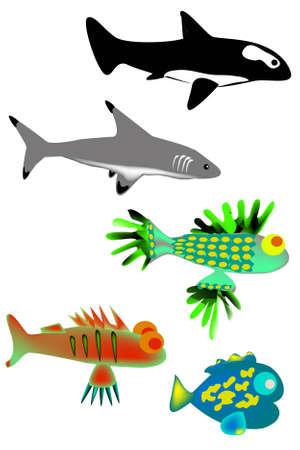 bullhead: A set of different sea fish Illustration