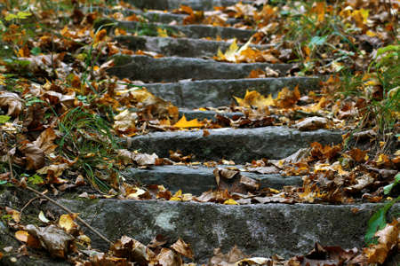 Really old stone stairs in the autumn Finnish forest. There are a lot of maple leaves on them. It is October of 2020.