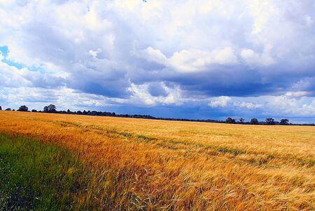 Campo verde y el azul cielo Foto de archivo