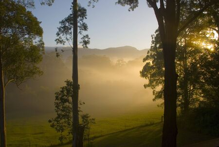 promised: Morning sun shines through the trees in the Promised Land, Bellingen, NSW, Australia Stock Photo