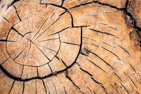 macro tree with cracks and knots