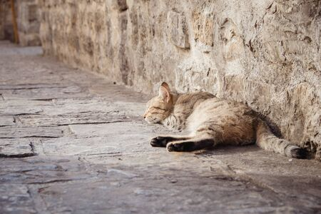 Cute cat sleeping on the pavement in Old Town of Budva Montenegro Imagens