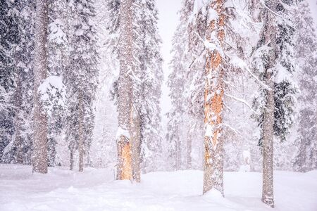 Forest after a heavy snowfall. Winter landscape.