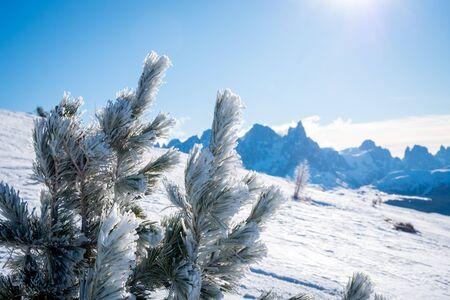 Sunny winter landscape with frozen spruce at Ski Area in Dolomites, Italy - Alpe Lusia. Ski resort in val di Fassa near Moena. Winter mountains in the morning.