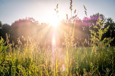 Sommersonnenuntergang auf grüner Wiese und Sonnenstrahlen durch Gras am Abend. Landschaftslandschaft von hellen Sonnenstrahlen über grünem Feld. Sommer Natur. Natürliches Sonnenlicht.