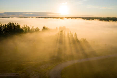 rays of the sun breaking through the fog in over the trees