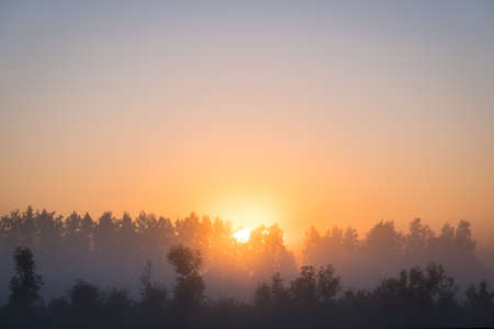Orange sun rising behind the trees, a meadow covered with dense fog. The golden hour, misty morning. Beautiful misty sunrise landscape. Foggy morning with trees through the dense fog.