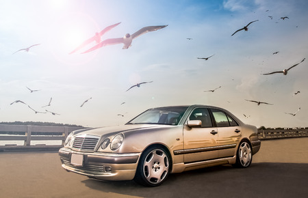 車やタイの冬に飛ぶカモメ