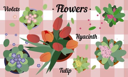 Top view of potted flowers. Flat illustration of hyacinth, Tulip and violets on a table with a checkered tablecloth. Cute spring greeting card in pastel colors with homemade flowers for window sills and balconies