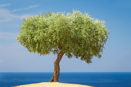 Small olive tree on a hill on sea and sky background 스톡 콘텐츠
