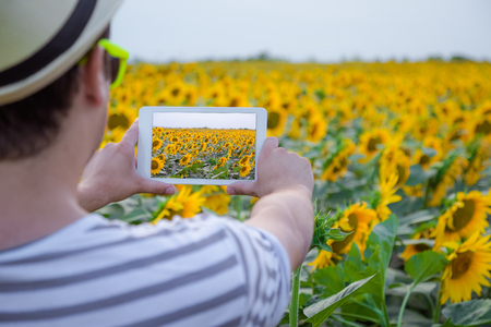 Rear view of young modern man taking photo of sunflower field by using digital tablet device Stock Photo