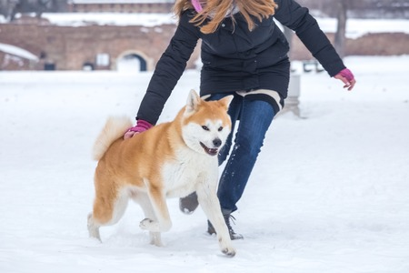 Female playing with her japanese akita dog in snow.