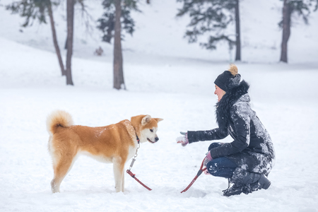 Young woman with akita dog pet in park on snowy day. 版權商用圖片
