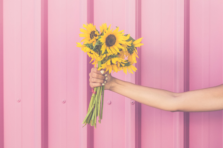 Close up of female hand holding bouquet of sunflowers on pink background.