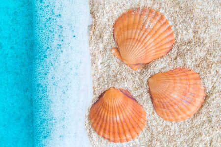 Flat lay of beautiful turquoise ocean with waves and seashells on beach minimal creative summer vacation concept.
