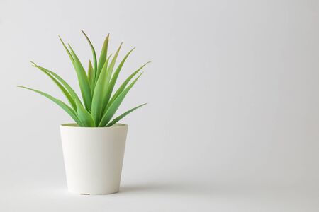 House potted plant against white background minimal creative concept. Space for copy.