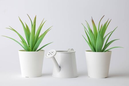 Small green plants in pots and watering can home design abstract. Banco de Imagens